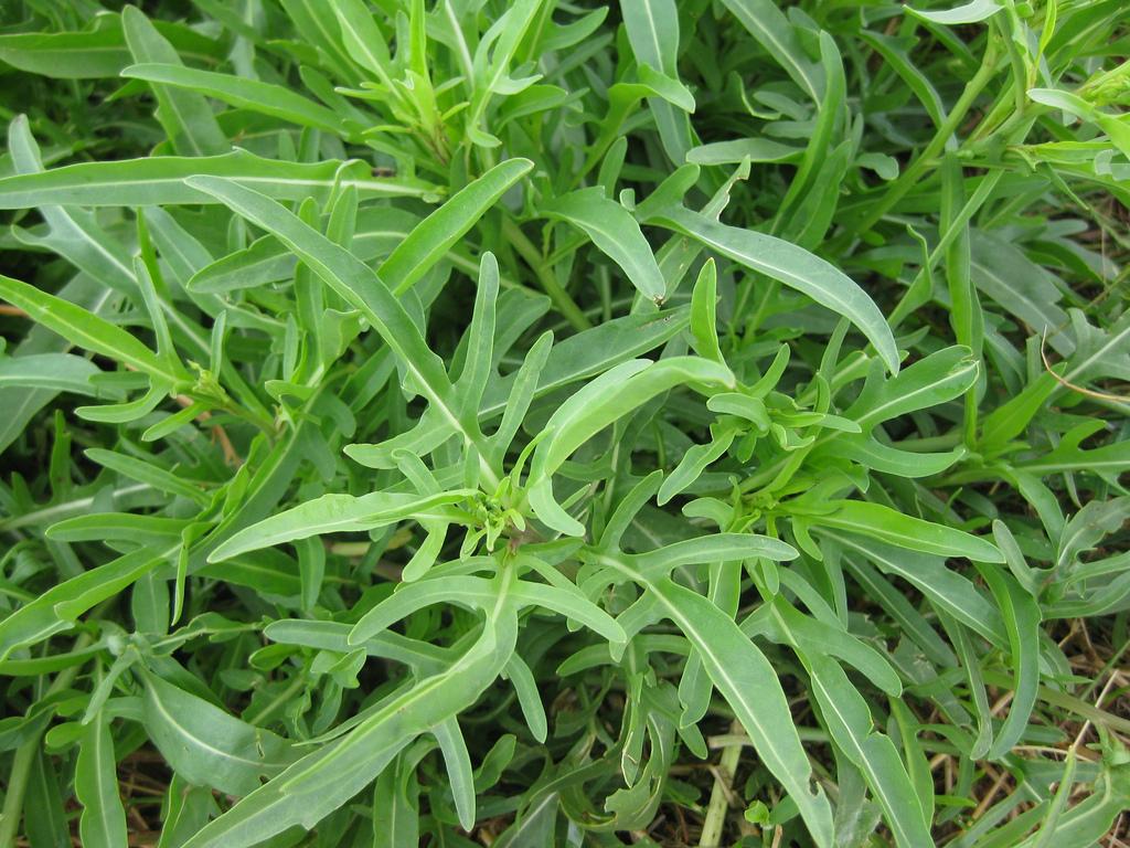Top 10 Perennial Herbs for your Veggie Garden